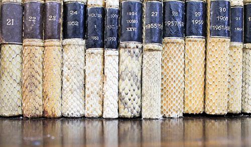 acervo-biblioteca-instituto-butantan