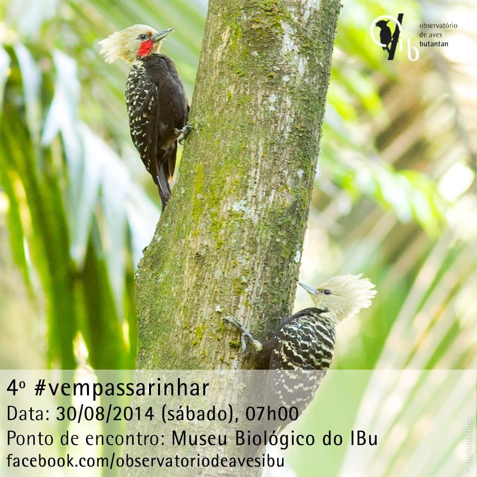 Cartaz da 4ª edição do #vempassarinhar