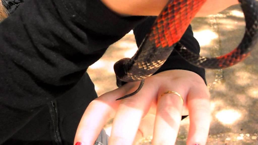 A atividade Mão na Cobra no Instituto Butantan