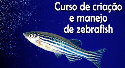 Curso Zebrafish Instituto Butantan