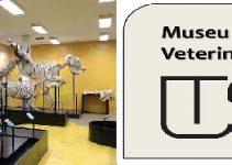 museu-anatomia-veterianaria-usp