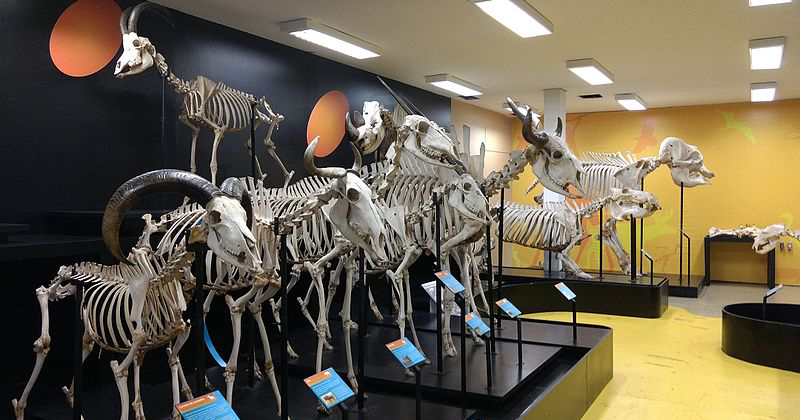 museu-anatomia-veterinaria-no-butanta