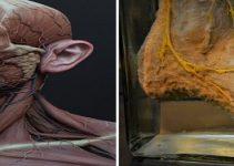 museu-anatomia-usp-no-butanta